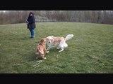 Mara aan het spelen, mooi lenteweertje vandaag 26 maart 2014