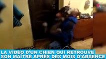 La vidéo d'un chien qui retrouve son maître après des mois d'absence ! Tout de suite dans la minute chien #178
