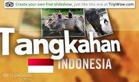"""Elephants"" Danandkate's photos around Tangkahan, Indonesia (savety shoe size 3 indonesia)"