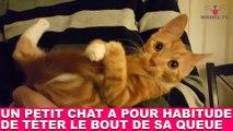 Un petit chat a pour habitude de téter le bout de sa queue ! Tout de suite dans la minute chat #179