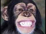 Er was eens een aapje uit Vorden