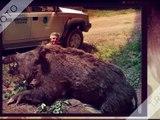 battue sanglier 2016 - chasse aux sanglier et cerf