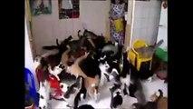 Des chats, beaucoup de chats, trop de chats