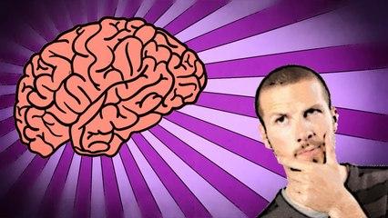 Est-ce qu'il vaut mieux avoir un gros ou un petit cerveau ? #25