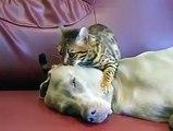 la tête du chien en kif d'un chat qui entrain de lui masser  !