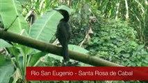 Cormoranes en Santa Rosa de Cabal