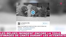 Les belges inondent encore la toile d'images de chats durant les attentats ! Tout de suite dans la minute chat #180