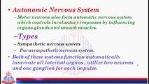 Somatic System & Autonomic Nervous System ( Sympathetic Nervous System )