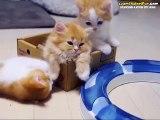 Kardeşiyle Oynamak İsteyen Sevimli Kedi