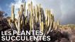 Interview : les étonnantes plantes succulentes du jardin exotique de Monaco