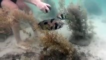 When a snorkeler rescued this helpless porcupine fish, he didn't expect to see this right by their side..