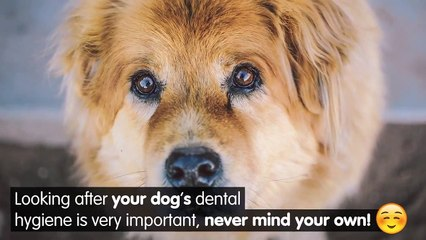 What really happens when you don't look after your pets teeth?