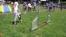 Agility dog - Monica e Peppa - Jumping :)
