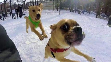 Dog Park - Go Pro