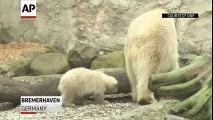 Les premiers pas d'un bébé ours blanc dans un zoo en Allemagne
