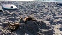 Enterré dans le sable ce chien s'endort.. Tranquille :)
