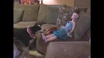 Ce chien prend cette poupée gonflable pour une vraie personne.. Aller viens jouer avec moi!!!