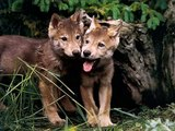 Wolves ^^