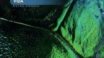 DOCUMENTAL VIDA INSECTOS 07 documental completo latino