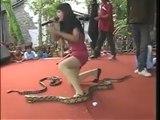 Une chanteuse meurt, mordue par un cobra pendant un concert