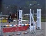cheval hongre kwpn Dwight par Zento et Ziezo par Sambucco