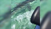Un requin attaque des touristes sur un jetski