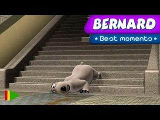Espectacular caída de Bernard / The spectacular fall of Bernard