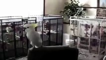 hardstyle parrot dancing to my new track lol