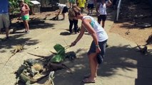 Woman attacked by duck in the zoo Watch out when feeding the Lizards LONG VERSION