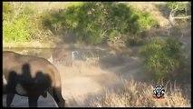 30 CRAZIEST Animal attacks Caught On Camera - Most Amazing Wild Animal Attacks