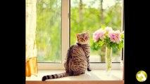 Как правильно выбрать ошейник от блох и клещей для кошек?