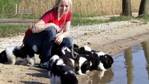 American Akita / Akita Amerykańska - JAGBULL miot/litter C puppy