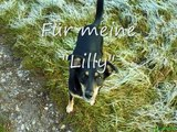 Lilly- I love my dog
