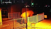Wild elephant wanders into Chinese border checkpoint by mistake
