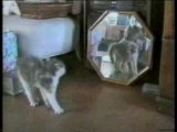 Funny Cats Drole Chats