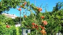 Villetta a schiera in Vendita da Privato - via San Tommaso D'Aquino, Colleferro