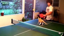 Funny cats playing Ping Pong Compilation 2014 [NEW HD]