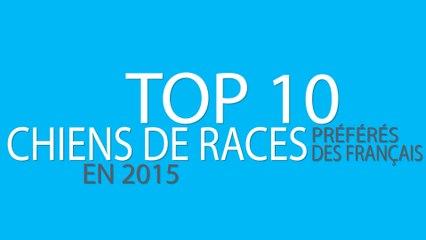 TOP 10 CHIENS DE RACES PRÉFÉRÉS DES FRANCAIS EN 2015