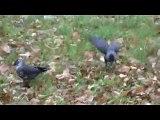 Jakiś ptak je liście