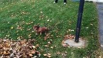 Ce chien kiffe vraiment les tas de feuilles mortes... Ahaha