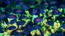 Cocos Keeling Islands   Dive in Paradise
