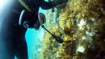 세부 임페리얼 펠리스앞 스쿠버 다이빙 PART.3(Philippines Sebu ScubaDiving)