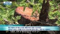 [KNN 뉴스] 화목보일러3-재선충 확산 통로로 전락