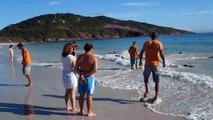 Un Turista Stava Filmando La spiaggia, Quando Improvvisamente Qualcosa E' Uscito Fuori Dall'acqua!!!