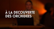 À la découverte des orchidées ( cycle La Botanique au Muséum 5/5)