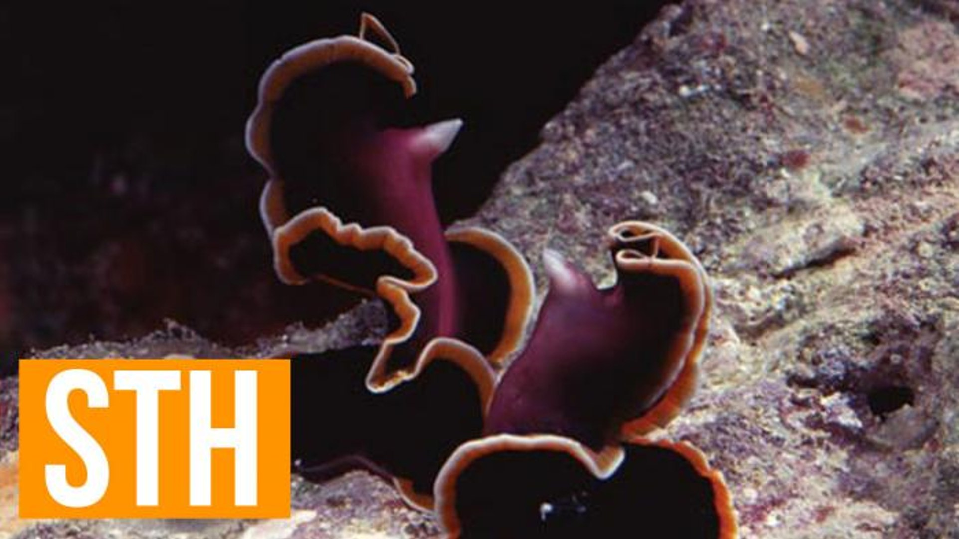 Shocking New Flatworm Sex Discovery Is Super Intense And Graphic