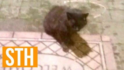 Psycho Killer Feral Cat Terrorizes And Attacks Suburban New York Town