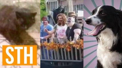 Feral Cat Terrorizes Town, Zombie Parade Upsets Mom, Talking Dog PSA!