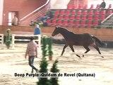 Deep Purple  Quidam de Revel Quitana