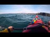 Kayakers Stumble Upon Basking Sharks in Kilkee